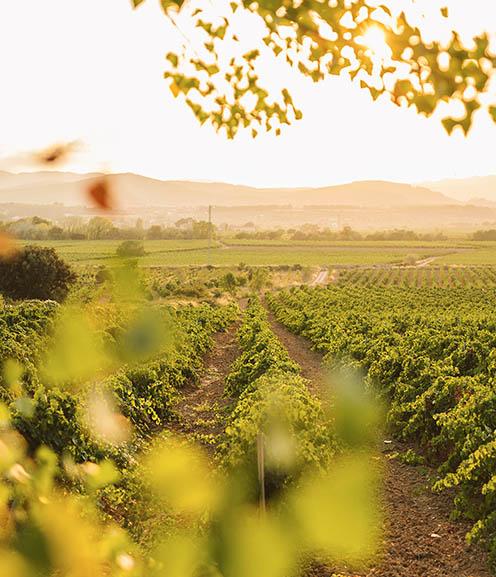 +500 vineyards